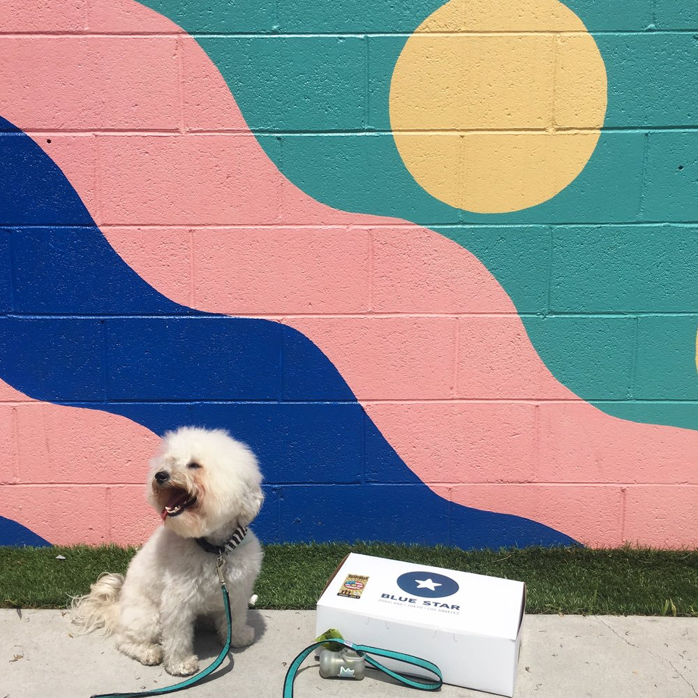 Cute fluffy dog by a mural with Blue Star Donuts on Abbot Kinney in Venice Beach, CA | Watson & Walls