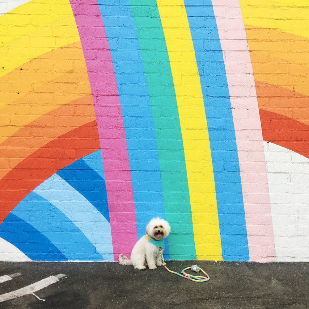 Cute fluffy dog by a rainbow mural by California Chicken Cafe in Venice Beach, CA | Watson & Walls