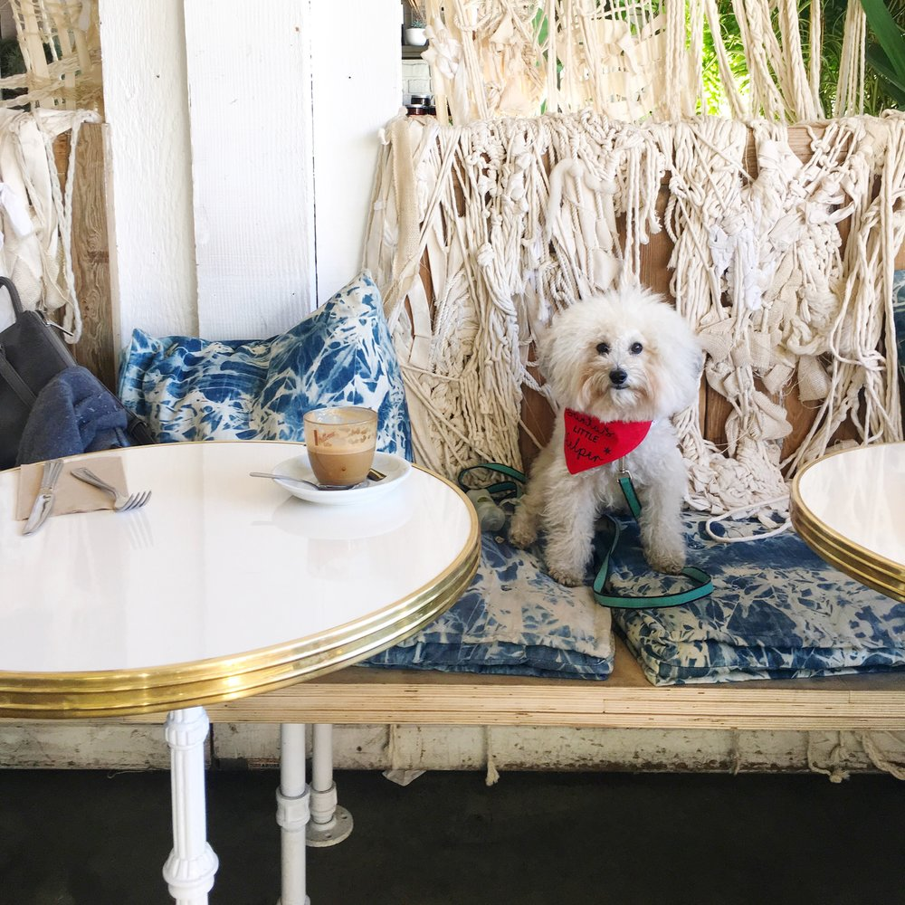 Cute fluffy dog at Butcher's Daughter on Abbot Kinney in Venice Beach, CA | Watson & Walls
