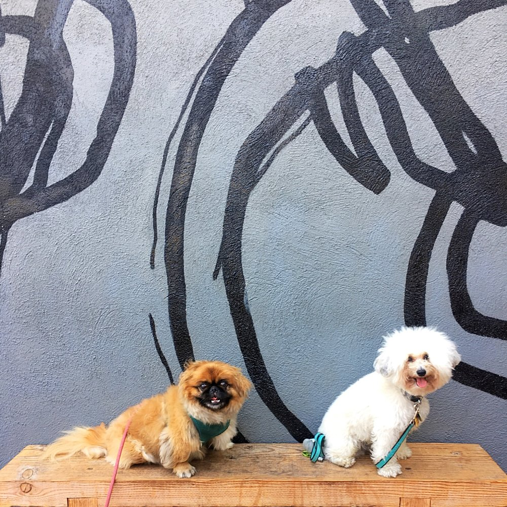 Cute fluffy dogs by a mural at Deus Ex Machina dog-friendly coffee shop in Venice Beach, CA | Watson & Walls