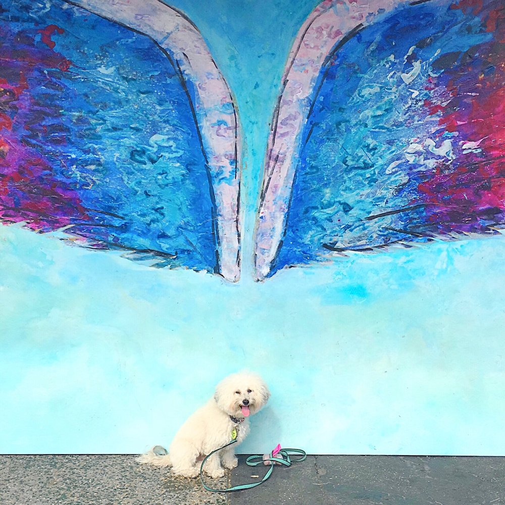 Cute fluffy dog by a Colette Miller Wings mural in Venice Beach, CA | Watson & Walls