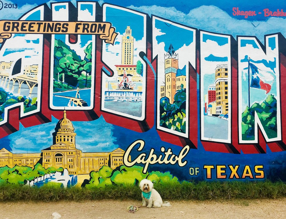 Watson with the Greetings from Austin Mural dog-friendly guide in Austin, TX | Watson & Walls