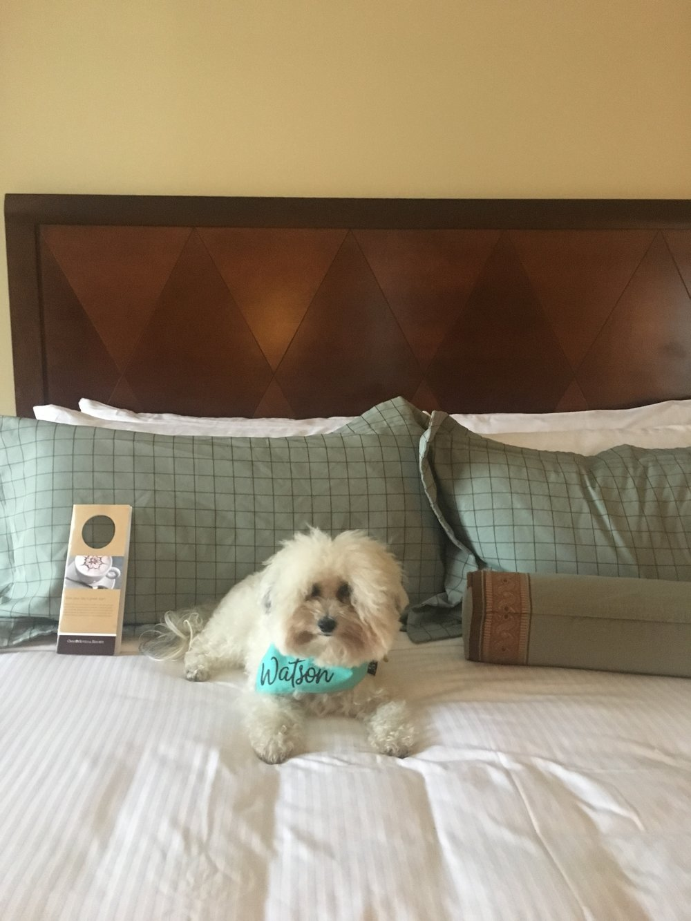 Watson at the dog-friendly Omni Hotel in Austin, TX | Watson & Walls