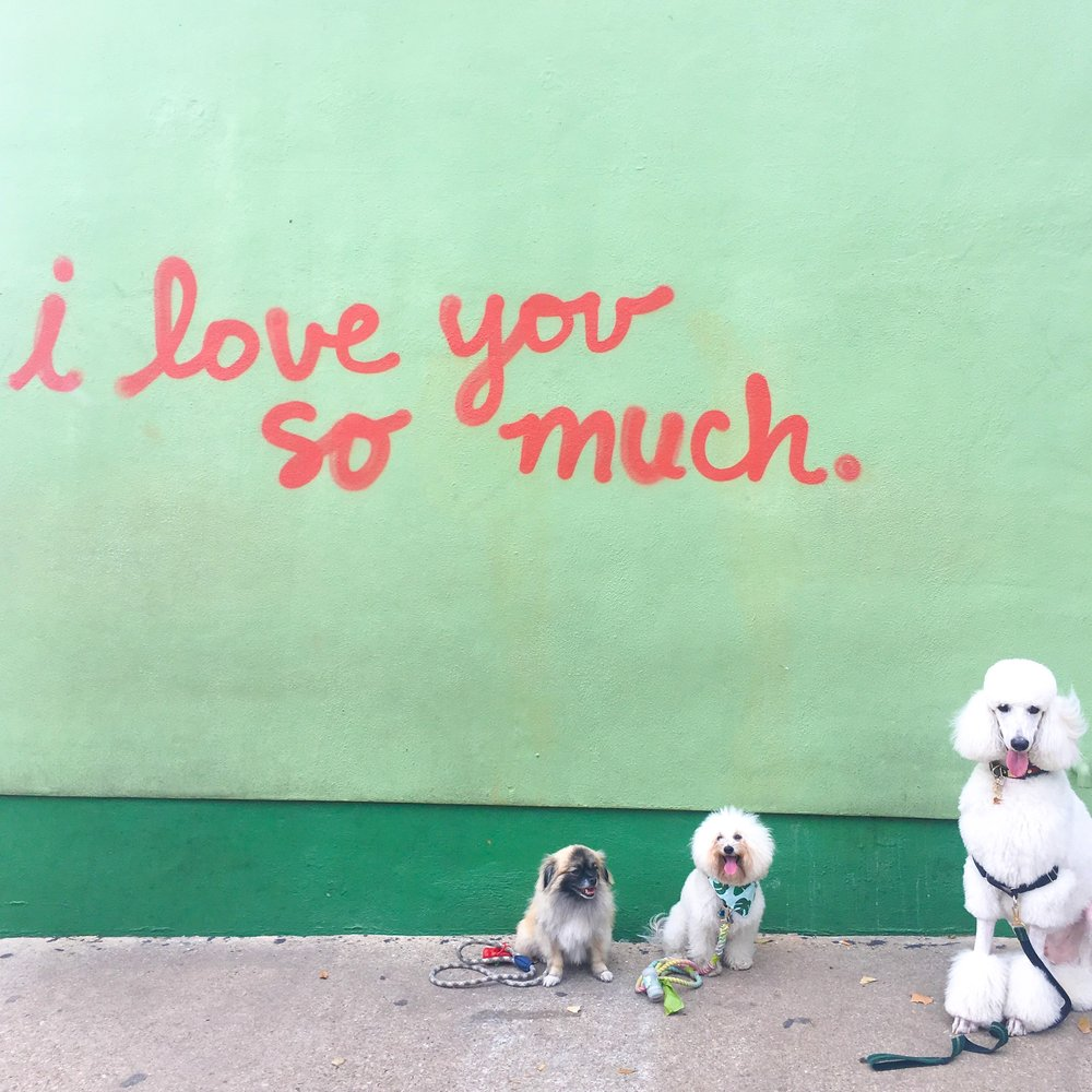 Cute dogs by the I Love You So Much Mural in dog-friendly Austin, TX | Watson & Walls
