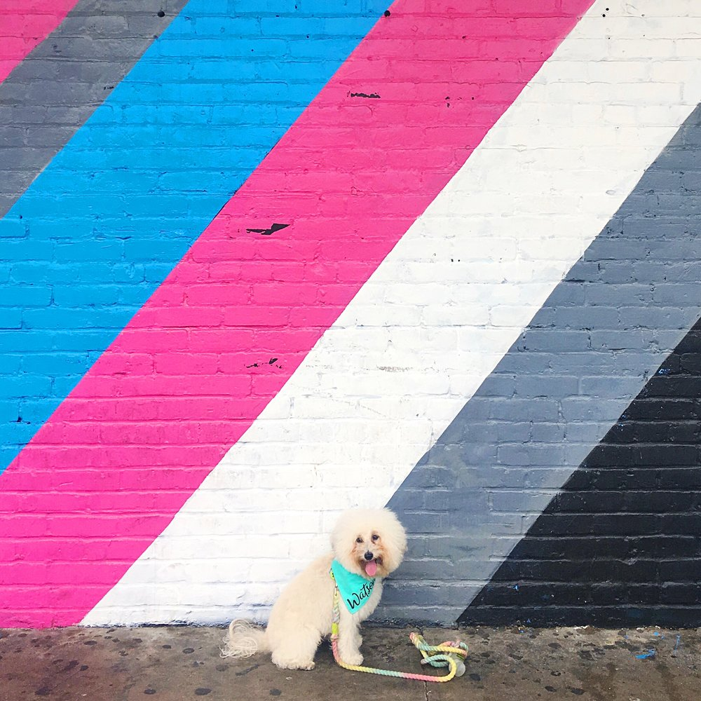 Watson by a colorful mural in dog-friendly Austin, TX | Watson & Walls