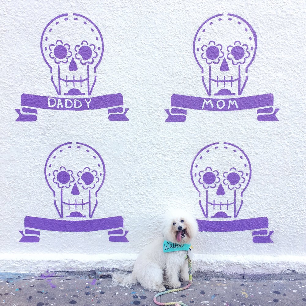 Watson by a Day of the Dead mural in dog friendly Austin, TX | Watson & Walls