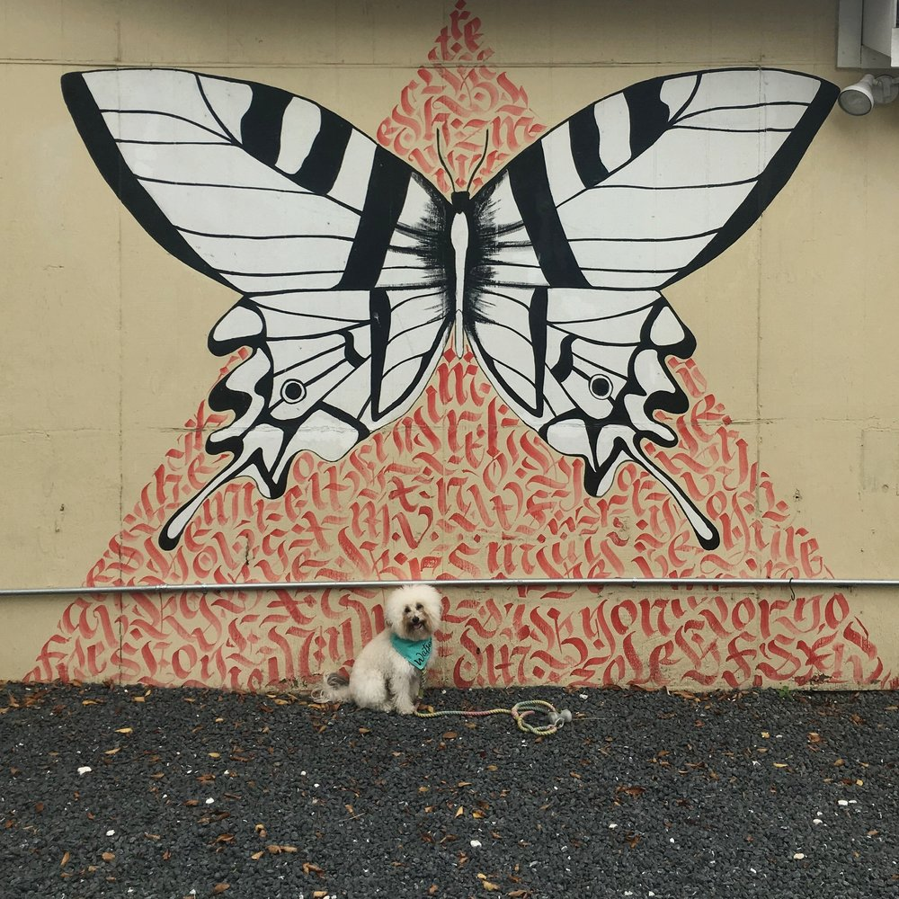 Watson by a butterfly mural in dog-friendly Austin, TX | Watson & Walls