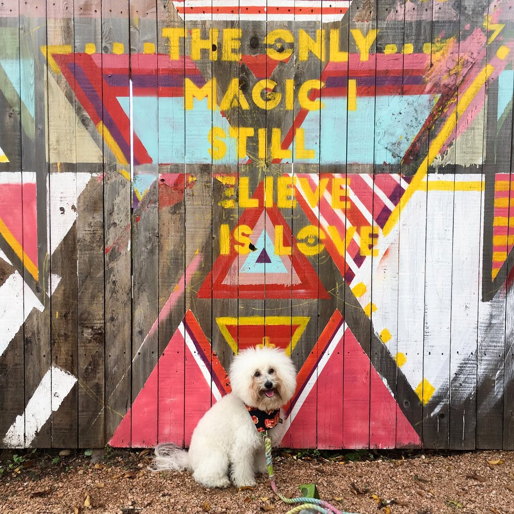 Watson by a Magic Mural in dog friendly Austin, TX | Watson & Walls
