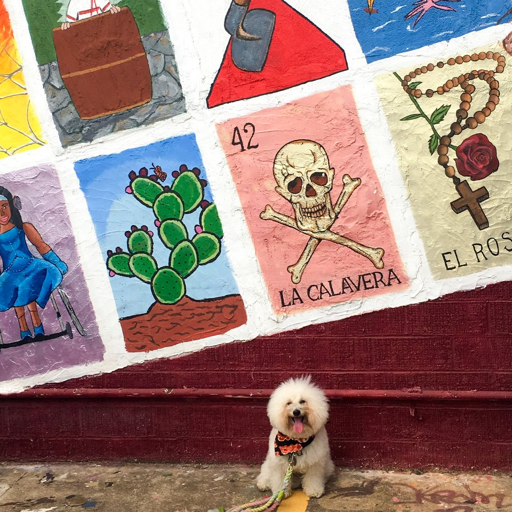 Watson by a Loteria Mural in dog-friendly Austin, TX | Watson & Walls