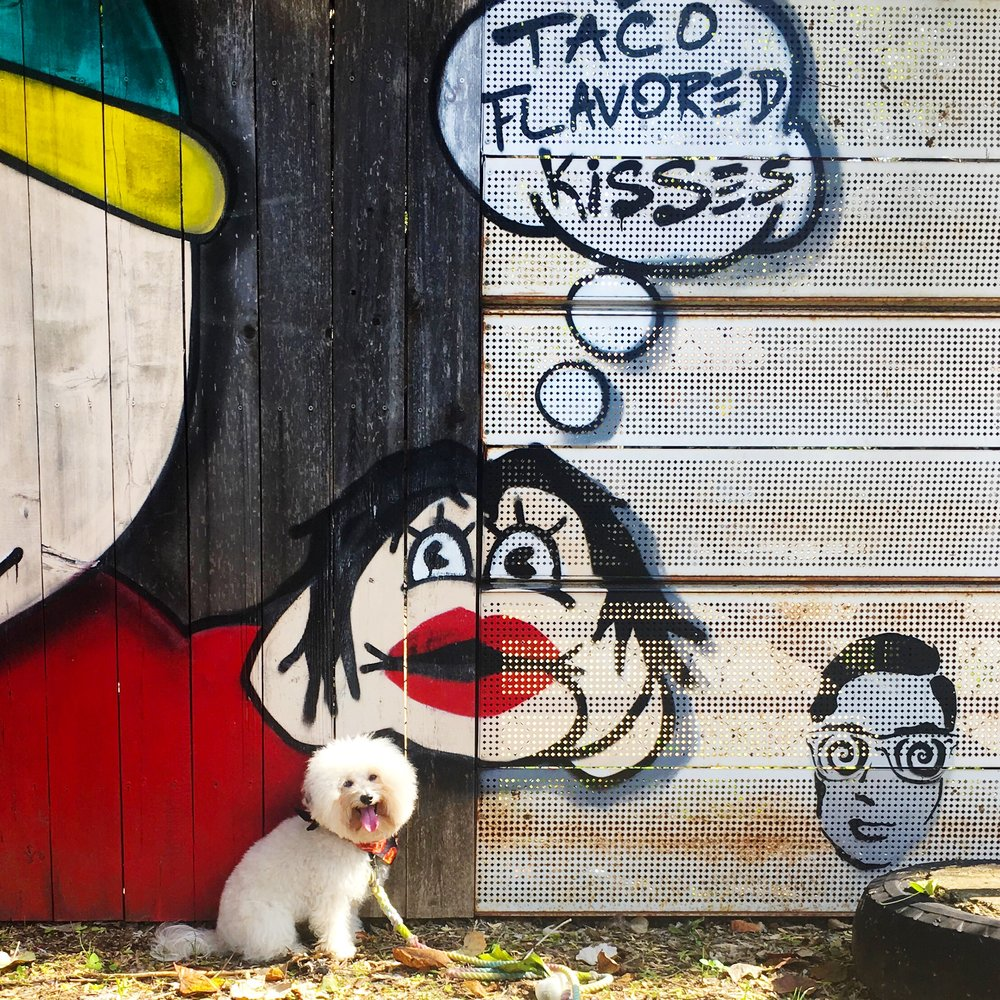 Watson by a Cartman from South Park Tacos Mural in dog friendly Austin, TX | Watson & Walls