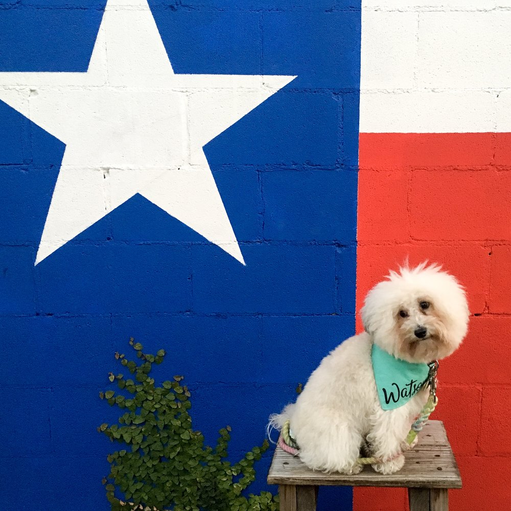 Watson with the Texas Flag Mural at the dog friendly bar Lustre Pearl in Austin, TX | Watson & Walls