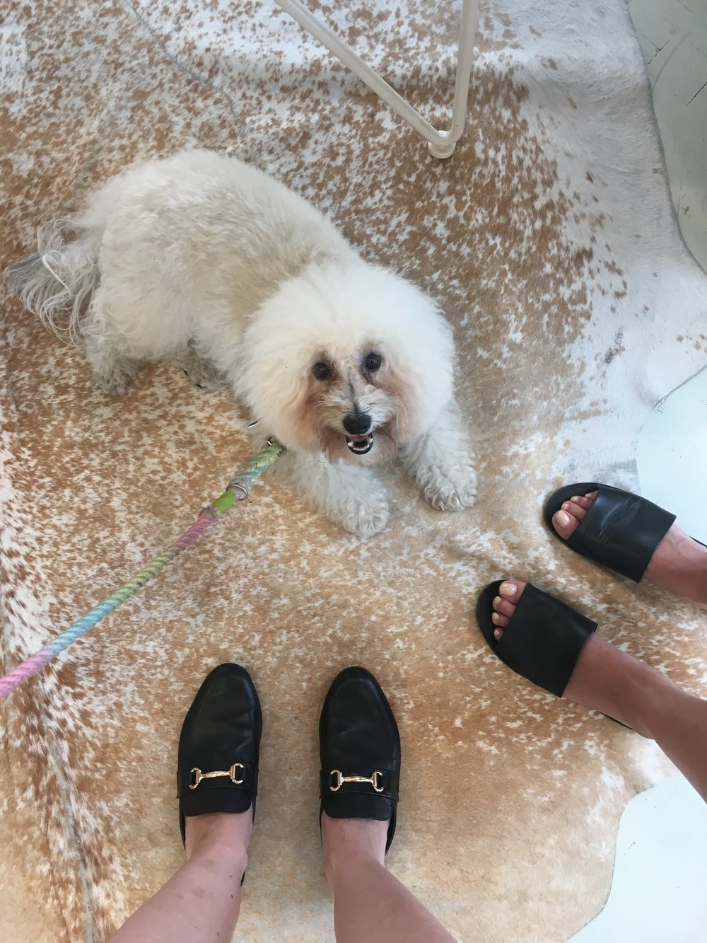 Madewell and Steve Madden shoes with a pretty floor at dog-friendly store by George in Austin, TX | Watson & Walls