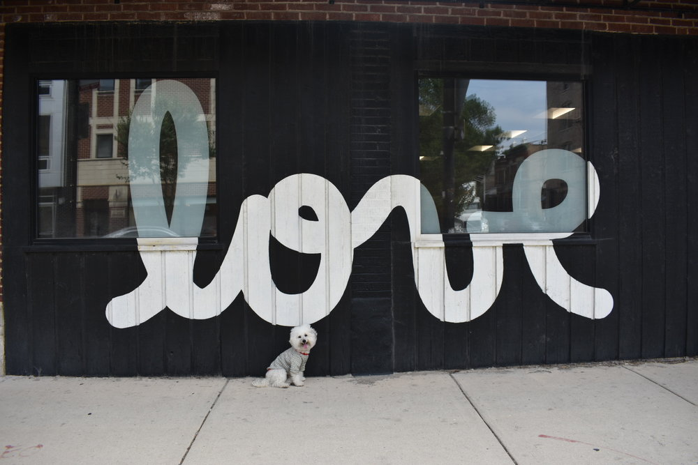 Love black and white mural in dog friendly Chicago | Watson & Walls