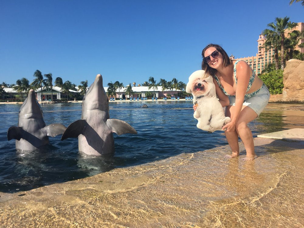 LiLiPi (Life Like Pet Pillow) at the Atlantis resort in the Bahamas | Watson & Walls