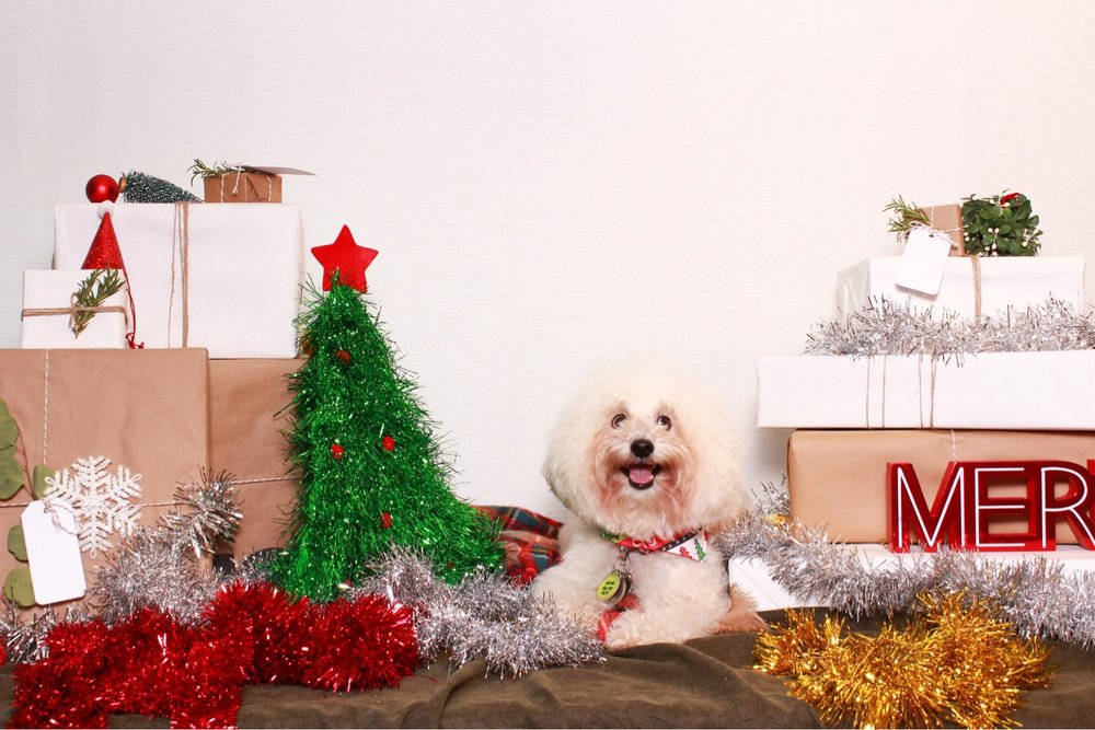 Fluffy Christmas Puppy | Watson & Walls