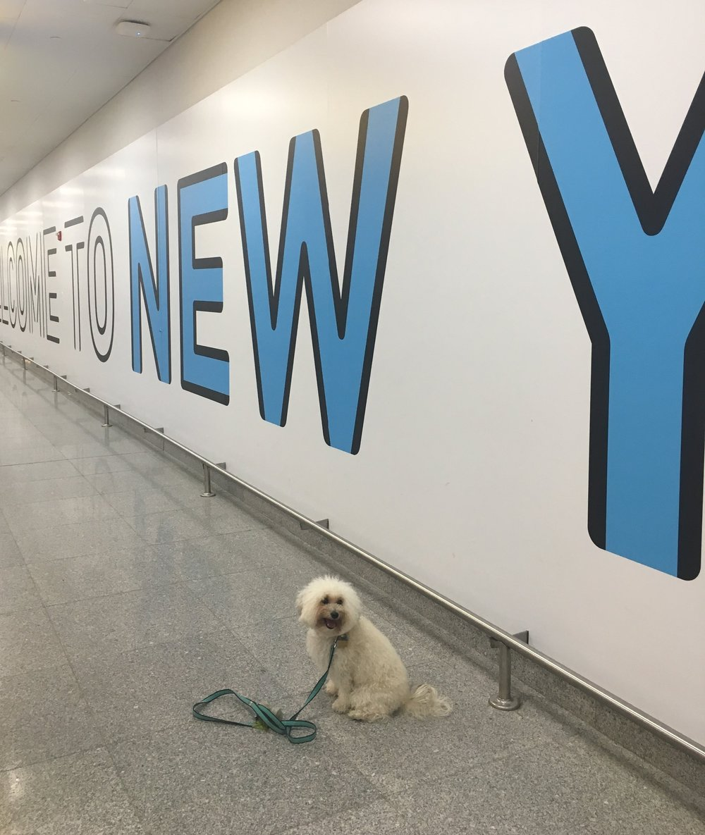 Fluffy dog at JFK airport in New York, NY | Watson & Walls
