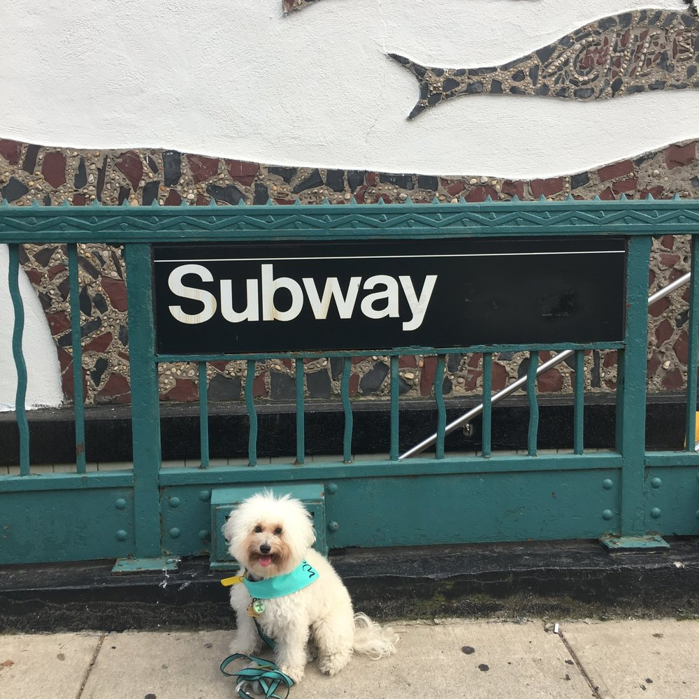 Fluffy dog on the New York City Subway | Watson & Walls