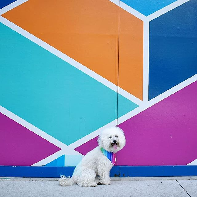 I'm not vulgar, I just happen to have a very colorful vocabulary 😈🌈 #dappermotherfluffer #ohmydog . . ‼️Reminiscing on my last #chicago trip for #throwbackthursdays 😊. Can't wait until this rain passes so I can mural hunt some more! If you haven't read my blog on all the #dogfriendly spots in #chitown yet, head to watsonandwalls.com/blog/Chicago 👉 . . #chicagoblogger #chicagolife #timeoutchicago #chicagoland #colorpop #colorfulart #dressedtomatch #acolorstory #dslrphotography❤️📷 #purpleandteal #fluffydog #itssofluffy #tbts #traveldog #travelbloggers #cityguide