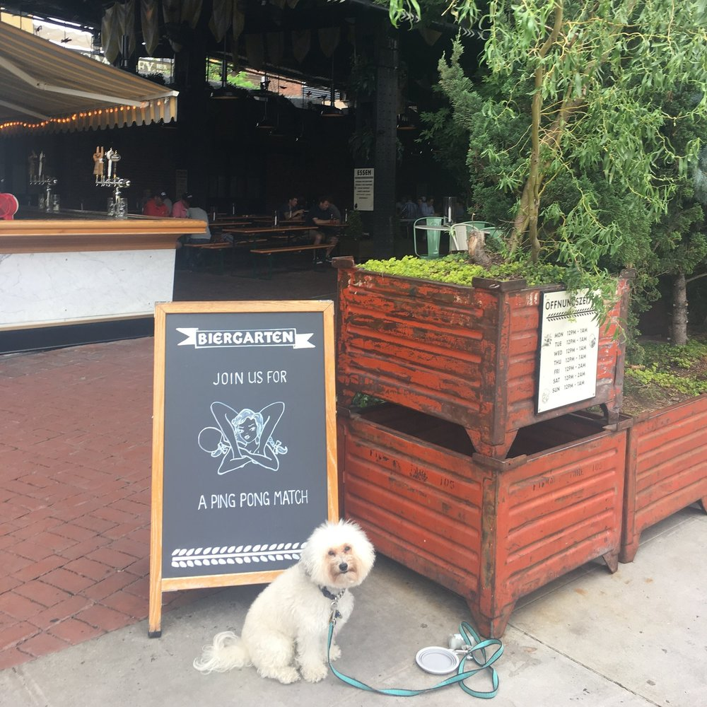 Watson at dog-friendly Standard Biergarten in Chelsea New York, NY | Watson & Walls