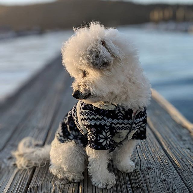 Contemplating life's greatest questions - to order pizza or tacos tonight 🤔🤔? #lookbackatit #pensiveAF . . . . . #bigbearlake #teampixel #portraitmode #fluffydogs #fluffybutt #fluffypuppy #weeklyfluff #blueshades #lakelife #sideeye #goodside #cutepetclub #mydogiscutest #ilovemydog #dogsarelife #bluelake #iloveblue #bigbearmountain
