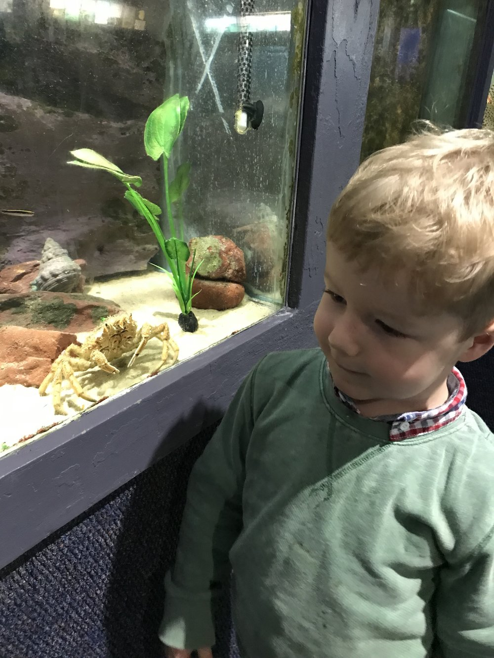 One of my own sons at an aquarium