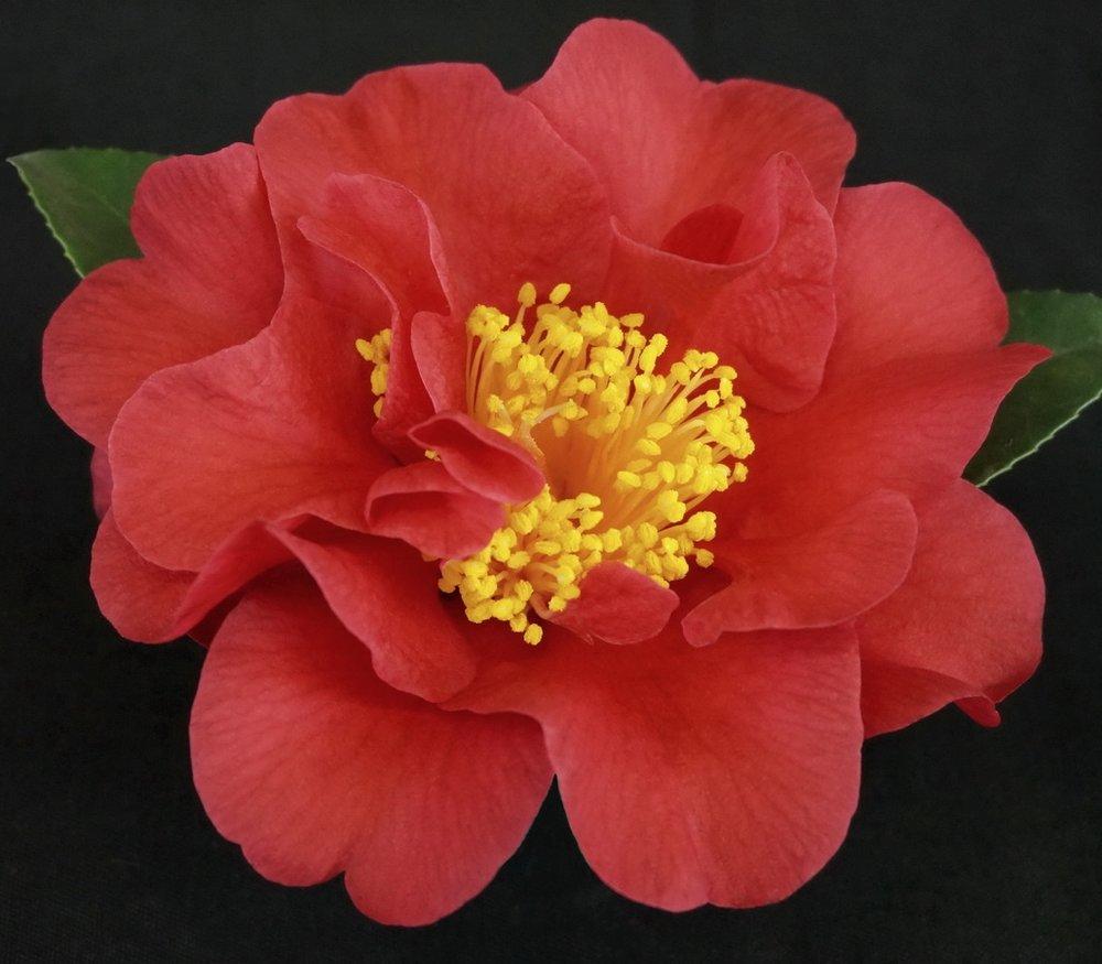 H. Rhonda Elizabeth