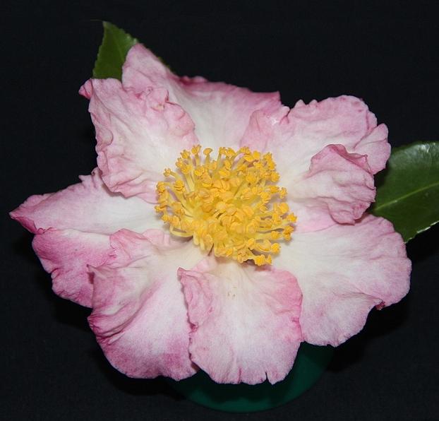 S. Fukuzutsumi