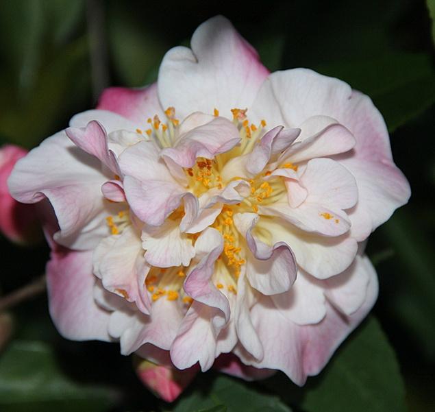 H. High Fragrance