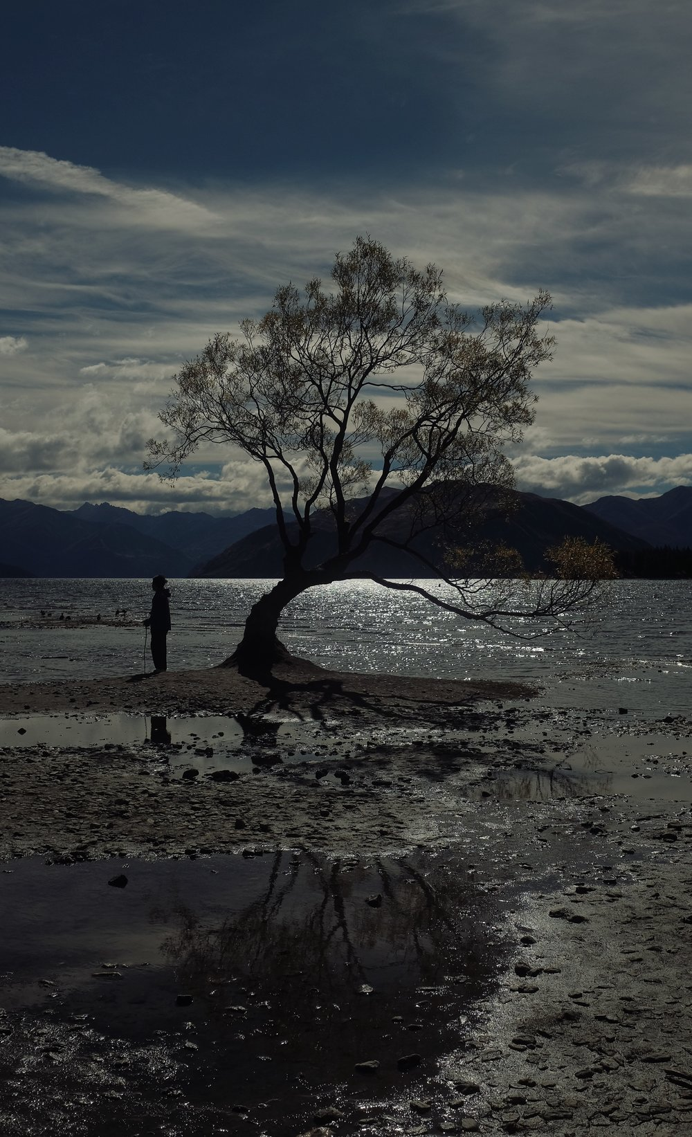 The famous tree on Lake Wanaka.