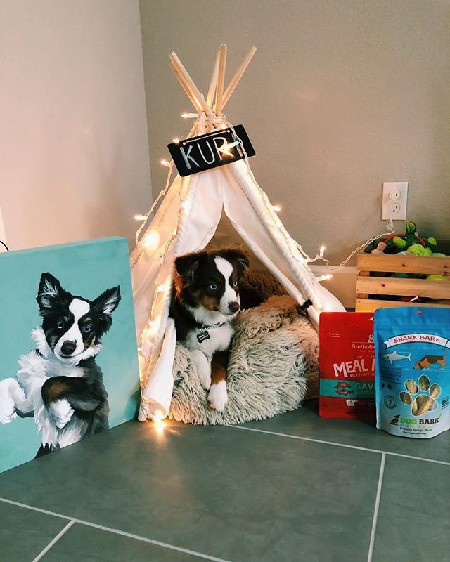 @kuri_miniaussie is so spoiled by Aunty @kaaeisme! Thank you so so much for his beautiful portrait & care package! We love it sooooo much! 😍♥️😘