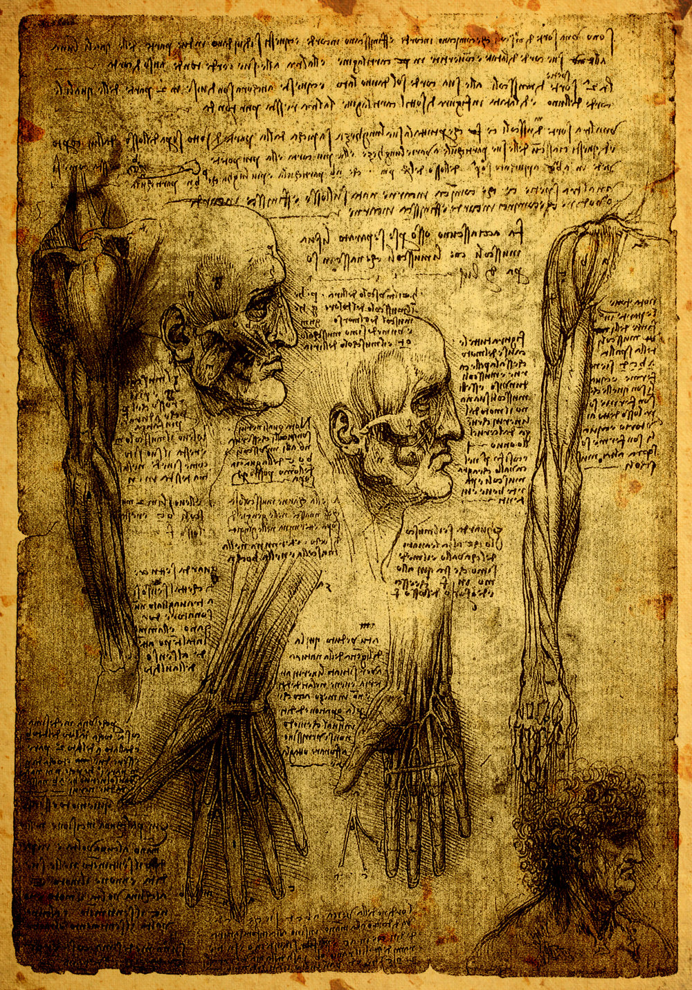 Da Vinci Study.jpeg
