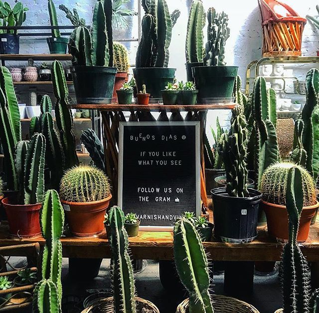 It's Fri-YAY! Come say hi at @parisonponce this weekend 👋🏼and thanks to @andrealuzinha for capturing this perfect shot 👌🏼🌵🌴 . . . . #atlanta #atliens #atliens #buenosdias #cactus #cactuslover #houseplantclub #houseplantsofinstagram #design #interiors #interiordesign #home #instagood #instahome #midtownatlanta #midtownatl #buckheadatlanta #buckheadatl #green #friyay #cheerstothefreakinweekend