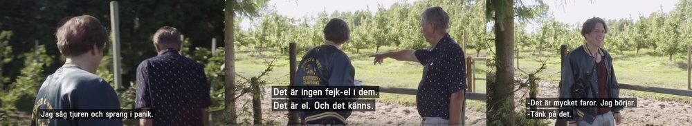 Simon Stålenhag får hjälp av en lokalbo i Rörum på jakten efter det träd Ellen Trotzig målat av. Nervös och dramatisk stämning!  Skärmdump från SVT.