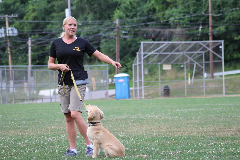 6 week obedience classes offered in Pittsburgh, PA