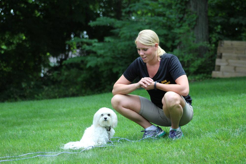 Pittsburgh, PA dog training small dogs