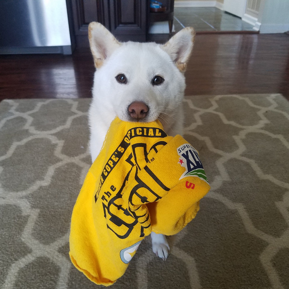 Duke is ready with the terrible towel
