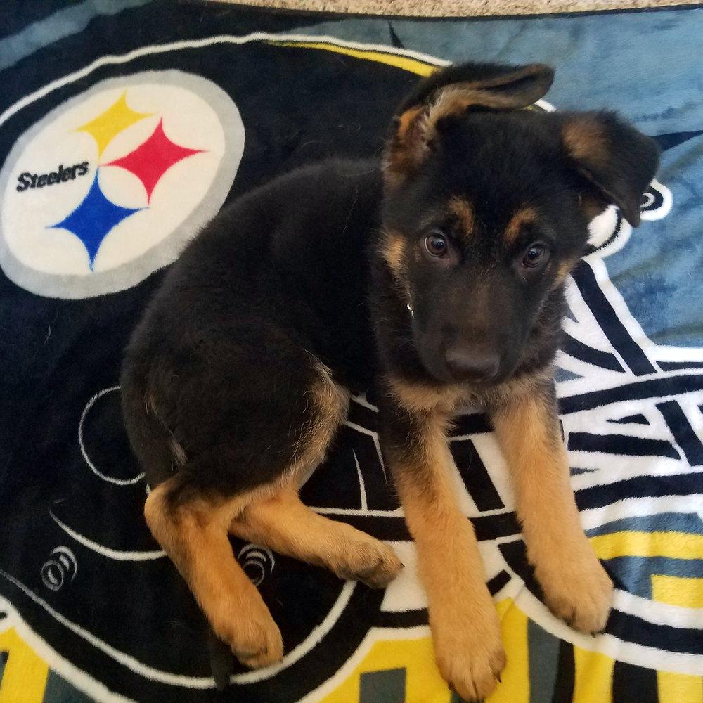 Kiki Steelers