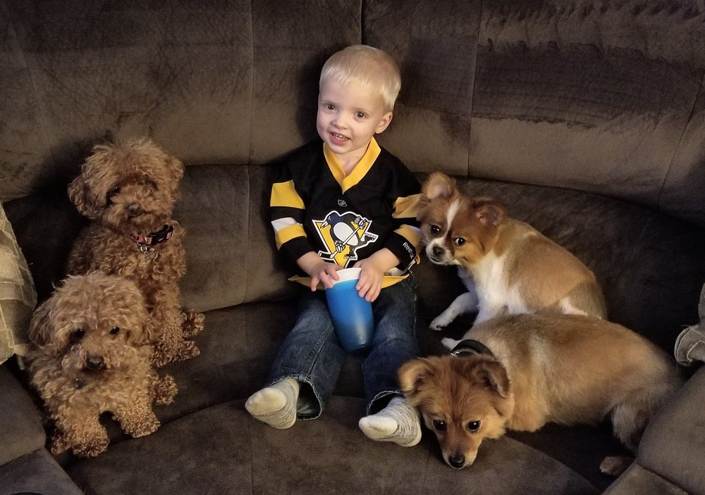 Cute baby Pens fan with dogs
