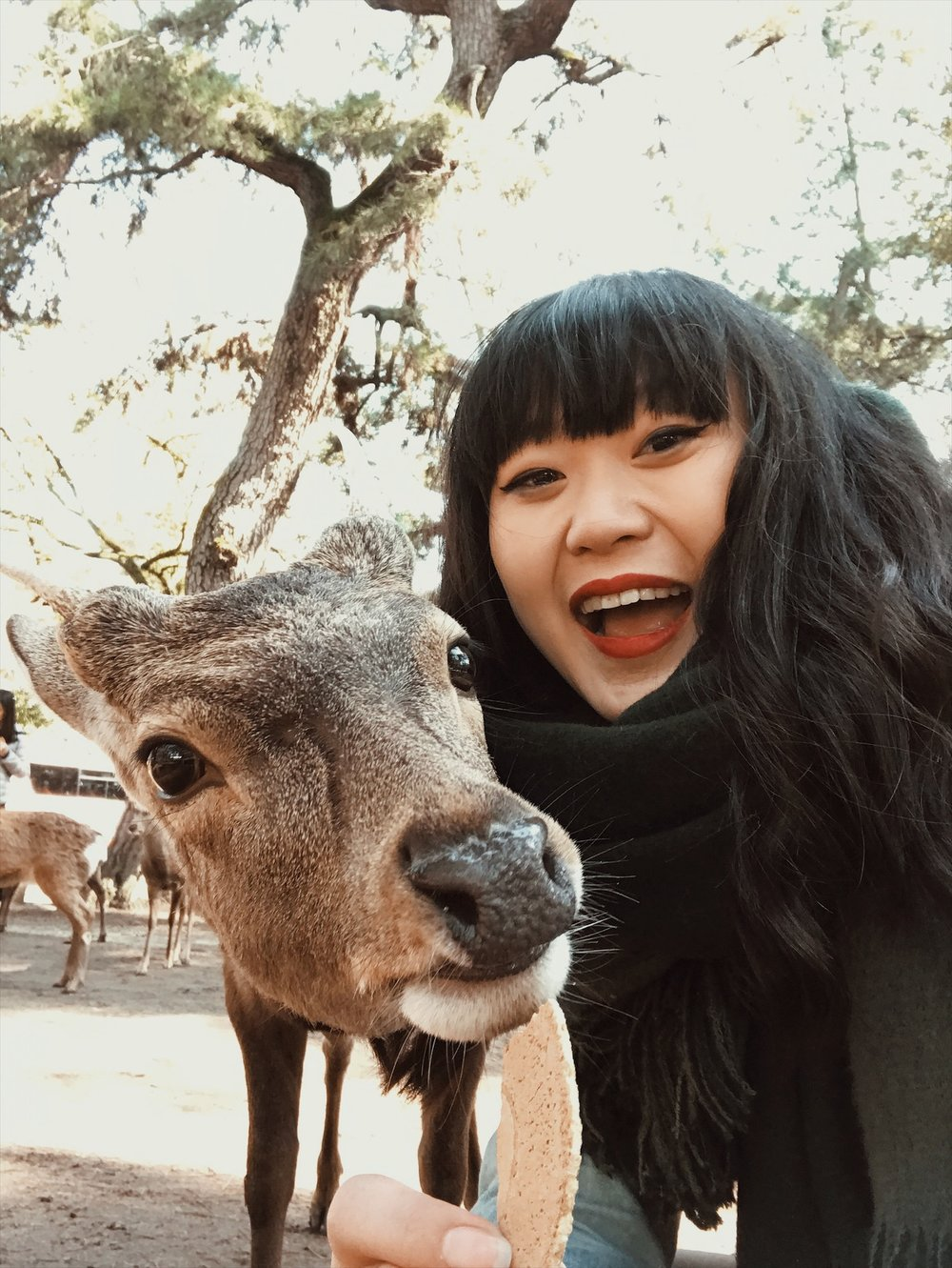 Nara Deer Park | What to do in Japan | Travel Guide | & Away We Went | Animals