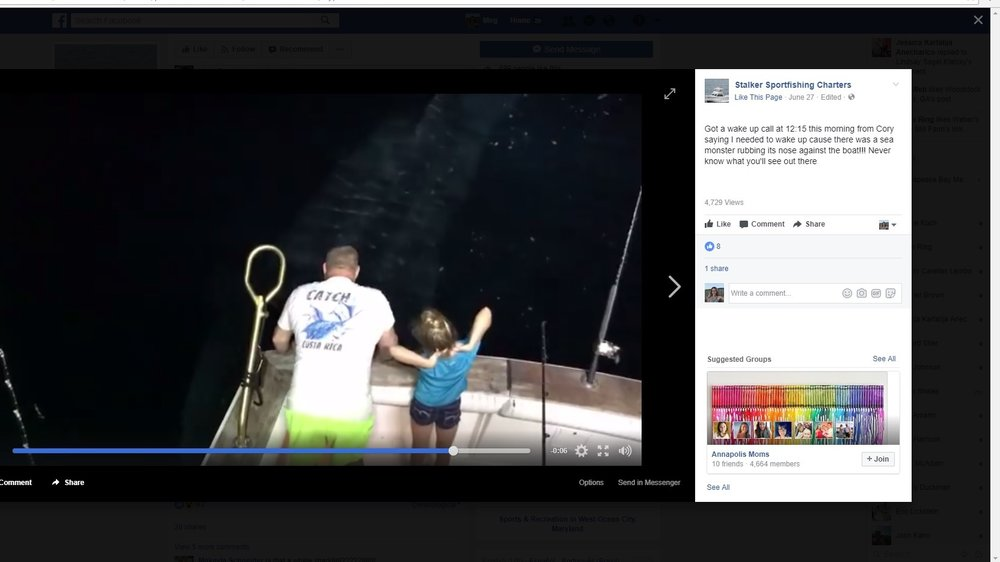 Stalker Sportfishing posted the sighting on Facebook.