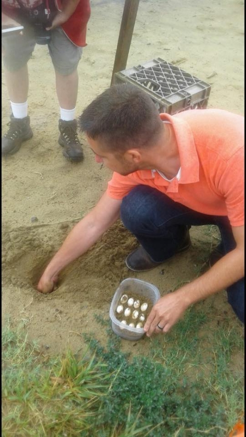 terrapin nest collecting.jpg