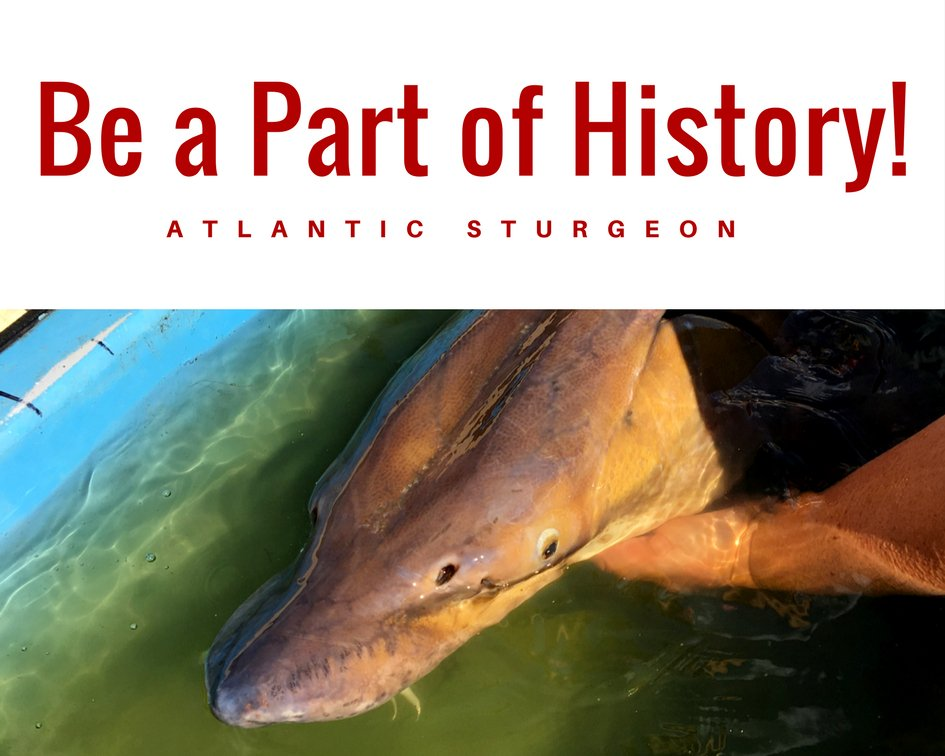atlantic sturgeon needs a name.jpg-large.jpg