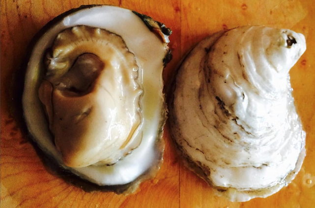 big juicy oyster.png
