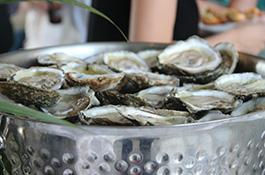 oyster york river vims.jpg