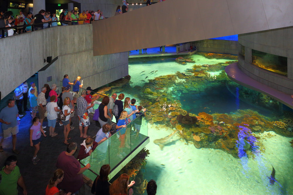 national aquarium black tip reef.jpg