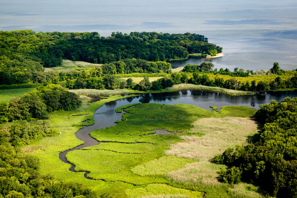 Wetlands near the mouth of the Elk River                     Photo: Chesapeake Bay Program/ Will Parson