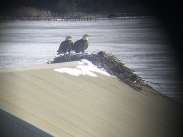 A pair of bald eagles on Mattox Creek, Potomac River, photo by Brett Anderson