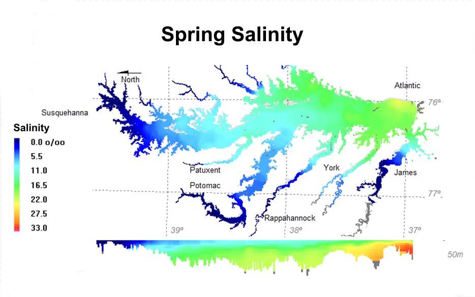 Spring salinity.jpg