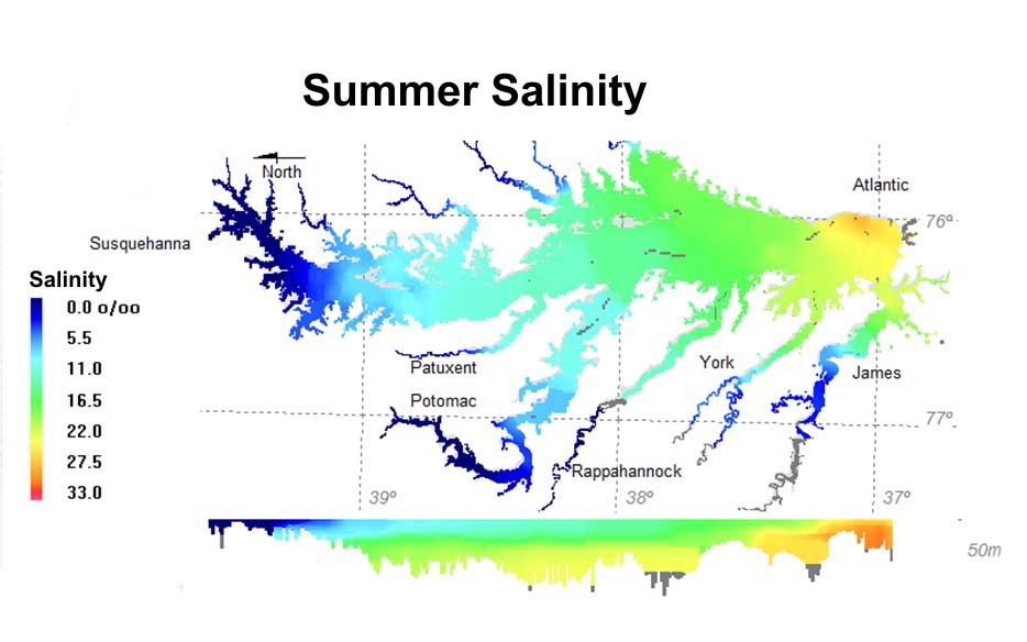 Summer salinity.jpg