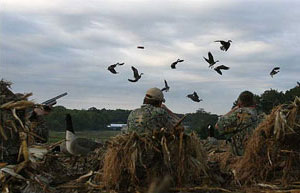 waterfowl hunting md dnr.jpg